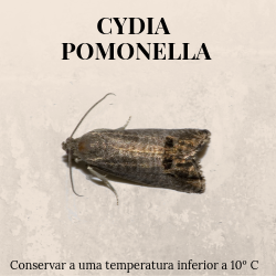 agroshop phosphorland armadilhas feromonas cydia pomonella