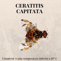 agroshop phosphorland armadilhas feromonas ceratitis capitata