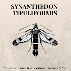 agroshop phosphorland armadilhas feromonas synanthedon tipuliformis
