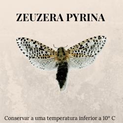 agroshop phosphorland armadilhas feromonas zeuzena pyrina